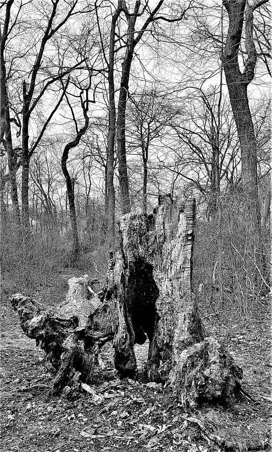 DEAD WOOD in BLACK AND WHITE by Rob Hans