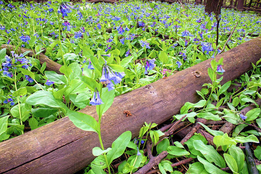 Deadwood and Blue Bells by Bonfire Photography
