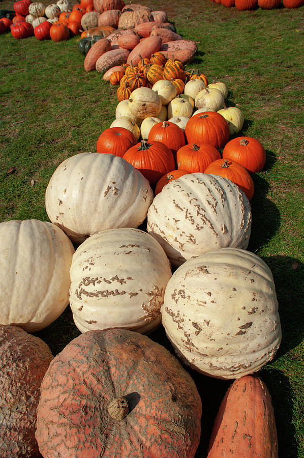 Decorative Display of Pumpkins by Jenny Rainbow