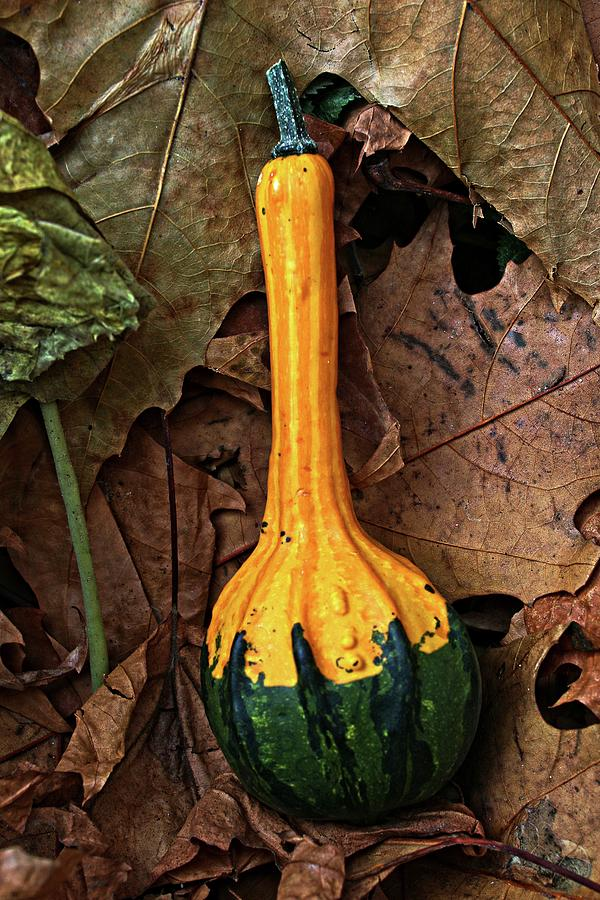 Decorative gourd by Martin Smith