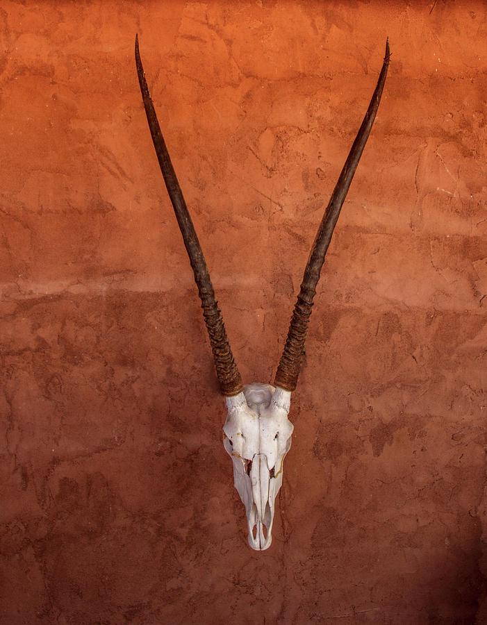 Decorative Oryx by Jean Noren