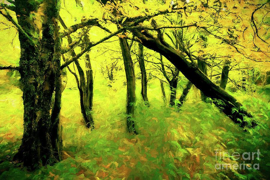 Deep Forest Autumn AP by Dan Carmichael