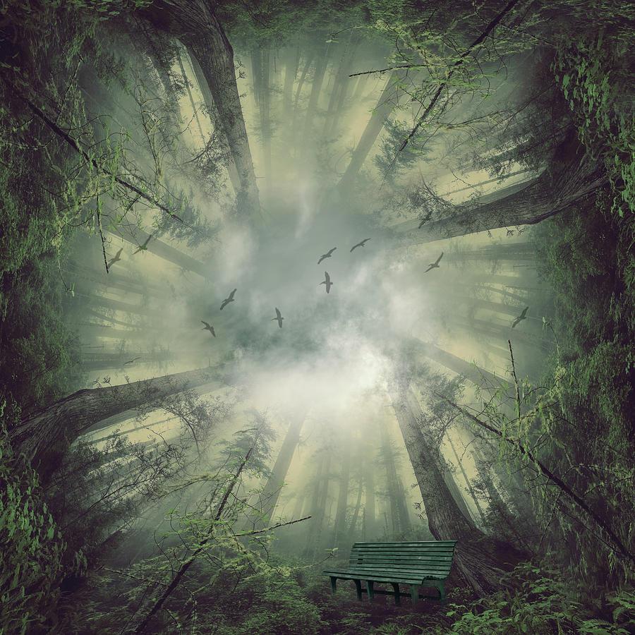 Deep Forest Digital Art