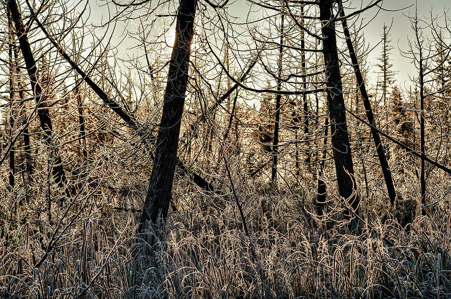 Deep Frost by Doug Gibbons