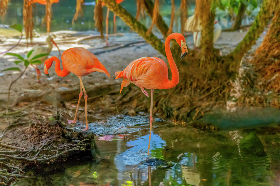 Deep Orange Flamingos cohabitate with other birds by Manny DaCunha