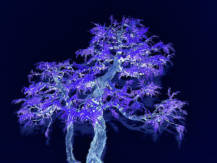 Deep Purple Bonsai Tree Digital Art By Tom Kelly
