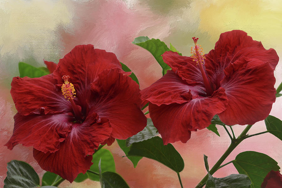Deep Red Hibiscus Mixed Media By Isabela And Skender Cocoli