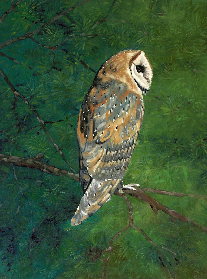 Deep Woods Barn Owl by Phil Chadwick