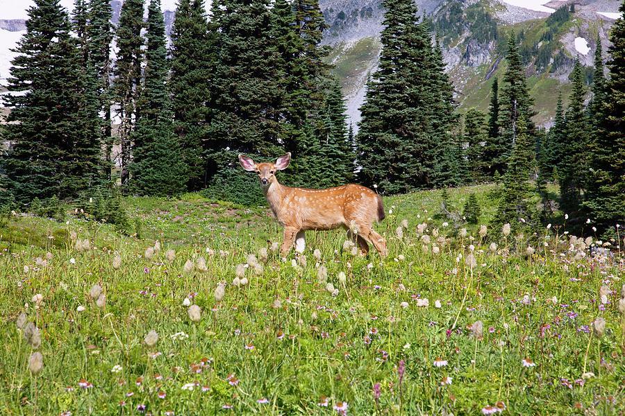 Deer Cervidae In Paradise Park In Mt Photograph by Design Pics / Craig Tuttle