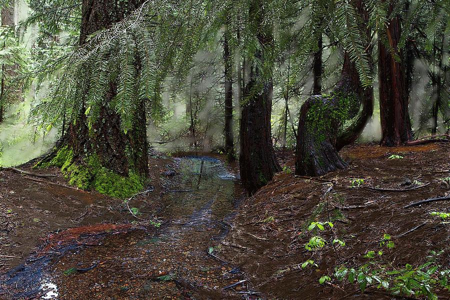 Deer Creek Headwaters at Skillman Horse Campground by Lisa Redfern