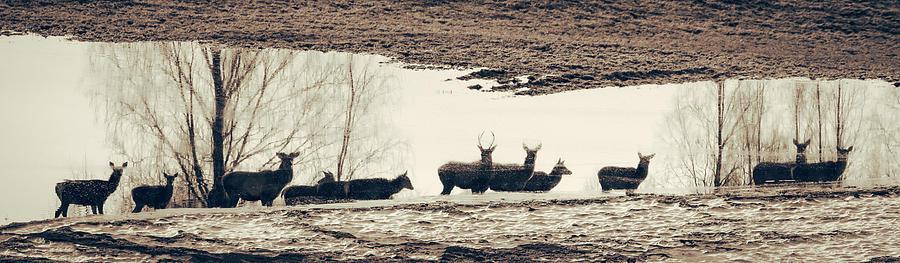 Deer Echoes by George Grigoriadis