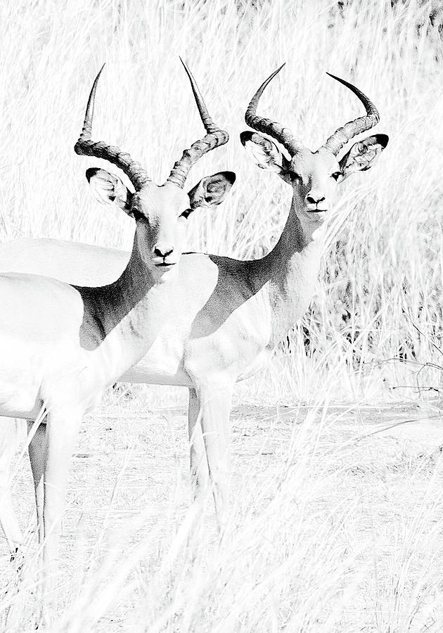 Deer friends by Gaye Bentham
