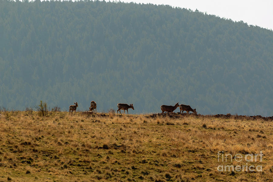 Deer Herd on a Warm Colorado Spring Morning by Steve Krull