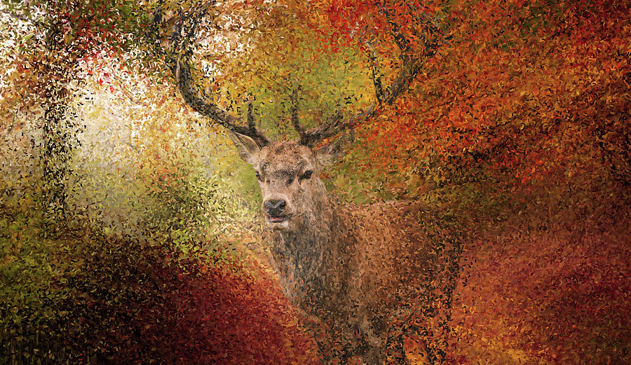 Deer in the autumn forest by Alex Mir