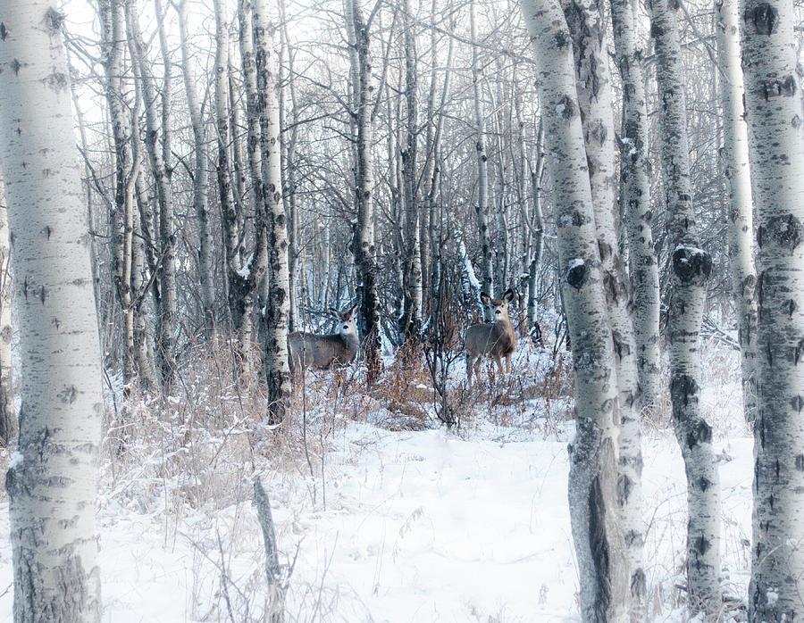 Deer In The Woods by Karen Rispin