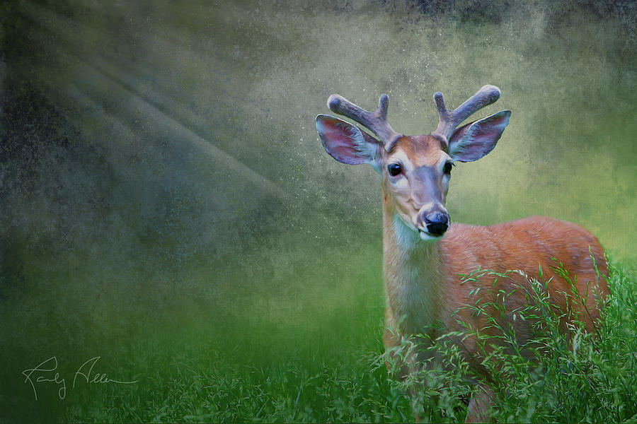 Deer in Velvet by Randall Allen