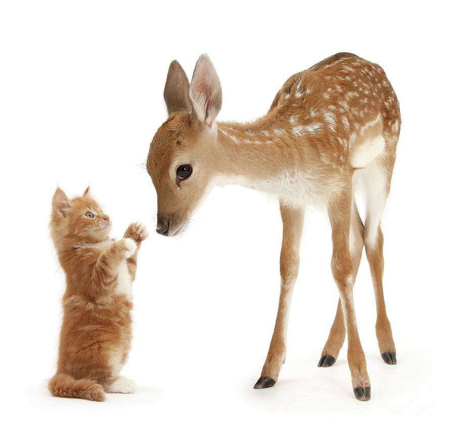 Fallow Deer Photograph - Deer Little Friend by Warren Photographic
