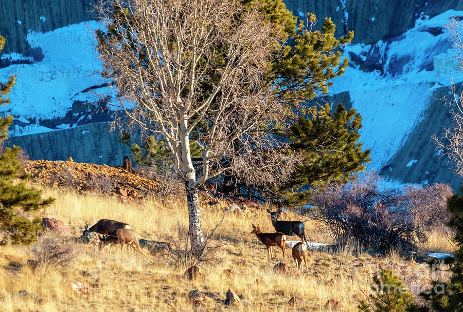 Deer On The Mountainside Photograph