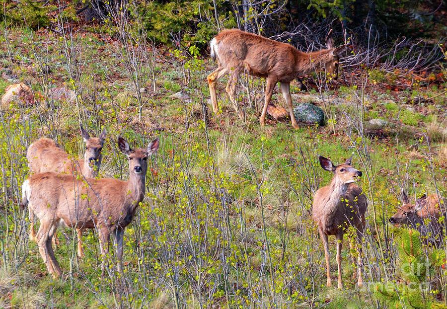 Deer On The Rocky Mountain Hillside Photograph