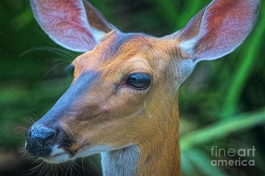 Deer Portrait by Deborah Benoit
