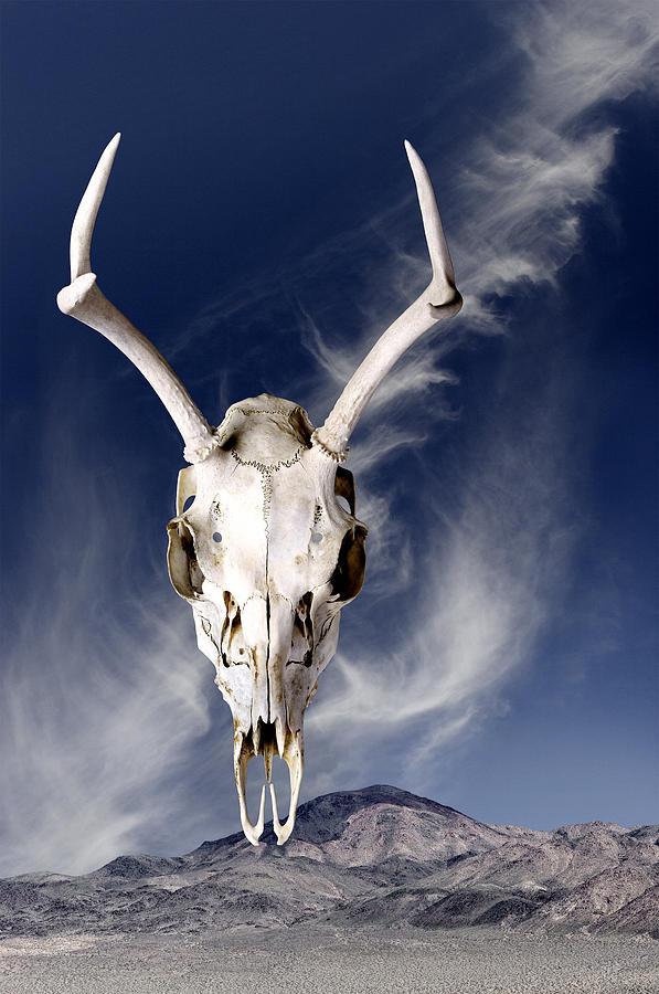 Deer Skull Floating Against Mountain Photograph by Diane Miller