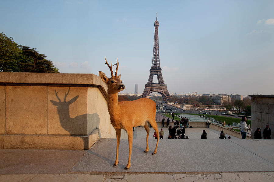 Deer Standing In Front Of Eiffel Tower Photograph by Chris Tobin