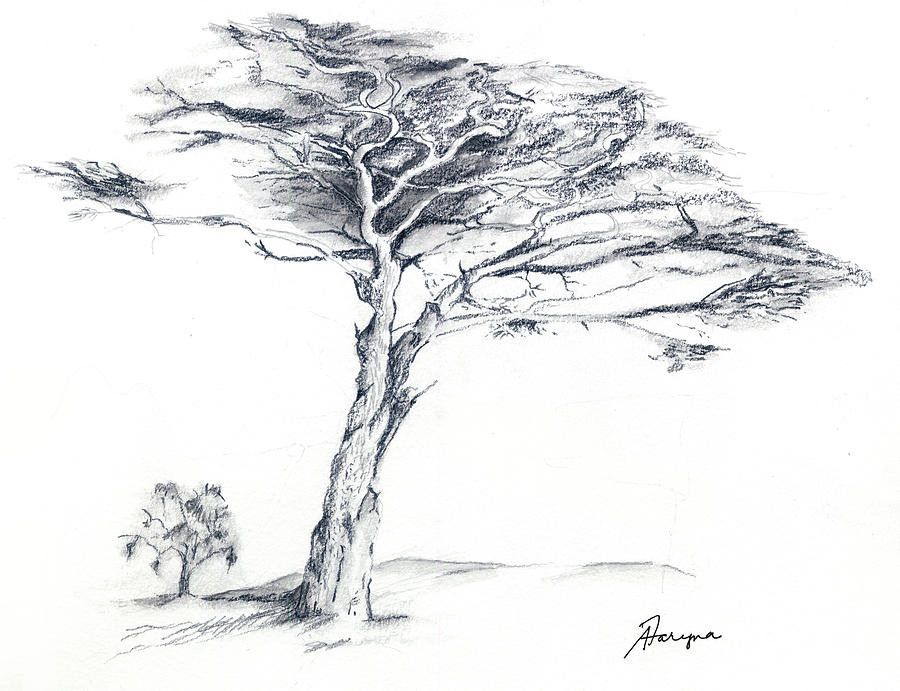 Tree Drawing - Defying the wind by Alice Faryna