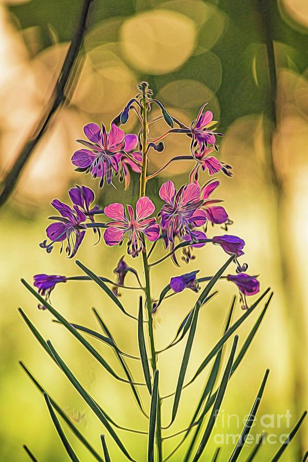 Delicate flower by Casper Cammeraat