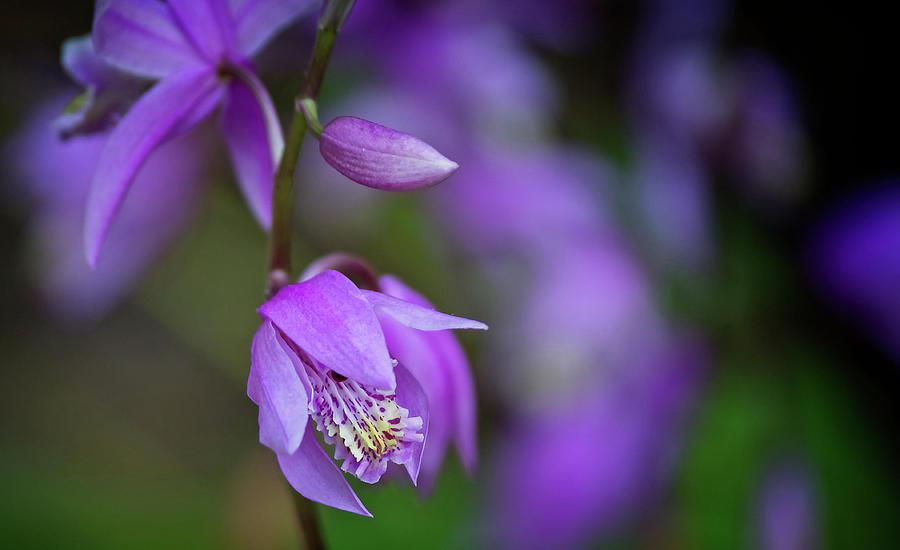 Delicate Purple Flower by Angel Sharum