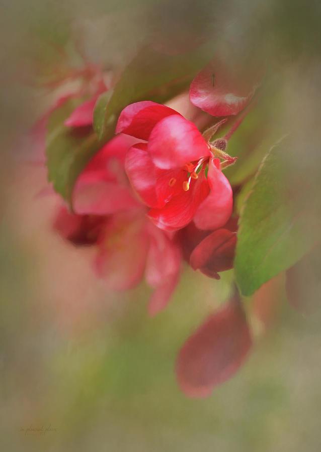 Delicate Spring by Joanna Kovalcsik