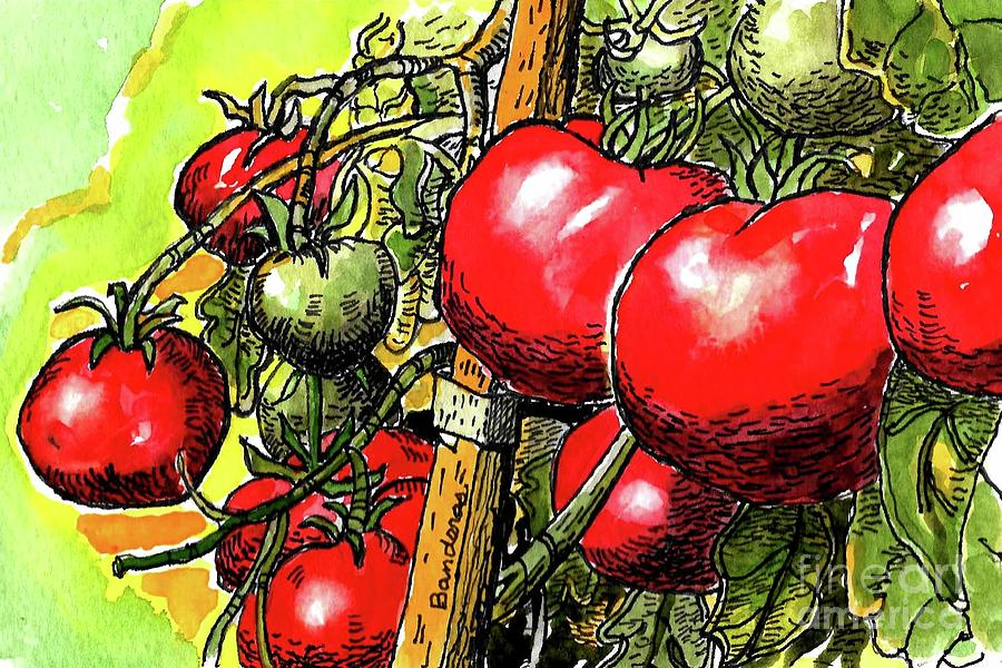 Delicious Tomatoes by Terry Banderas