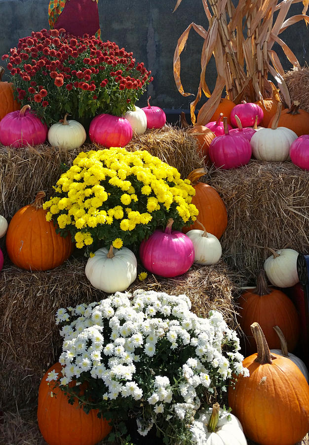 Delightful Autumn Decor Photograph