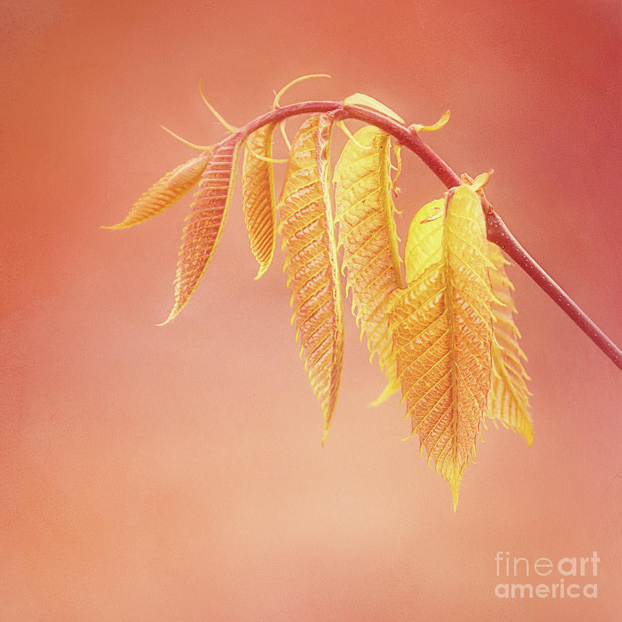 Delightful Baby Chestnut Leaves by Anita Pollak