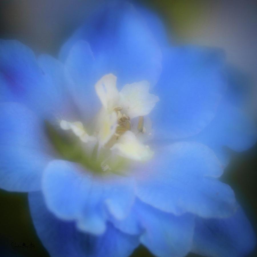 Delphinuim Joy by Sandra Day