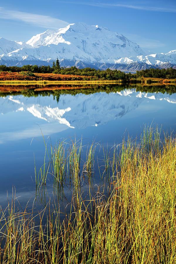 Denali Photograph - Denali Reflection by Tim Newton
