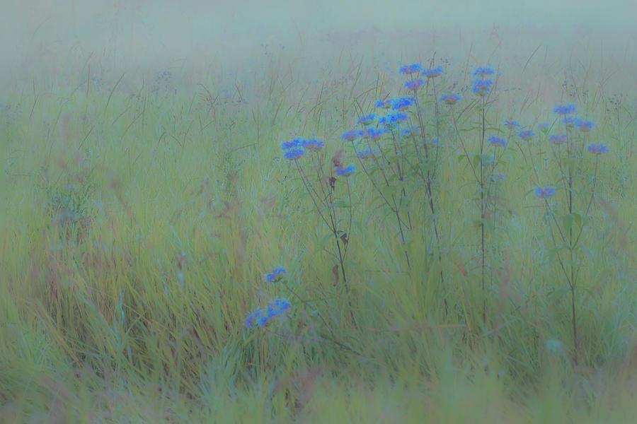 Nature Photograph - Descent into evenings Blue by Paul Malen