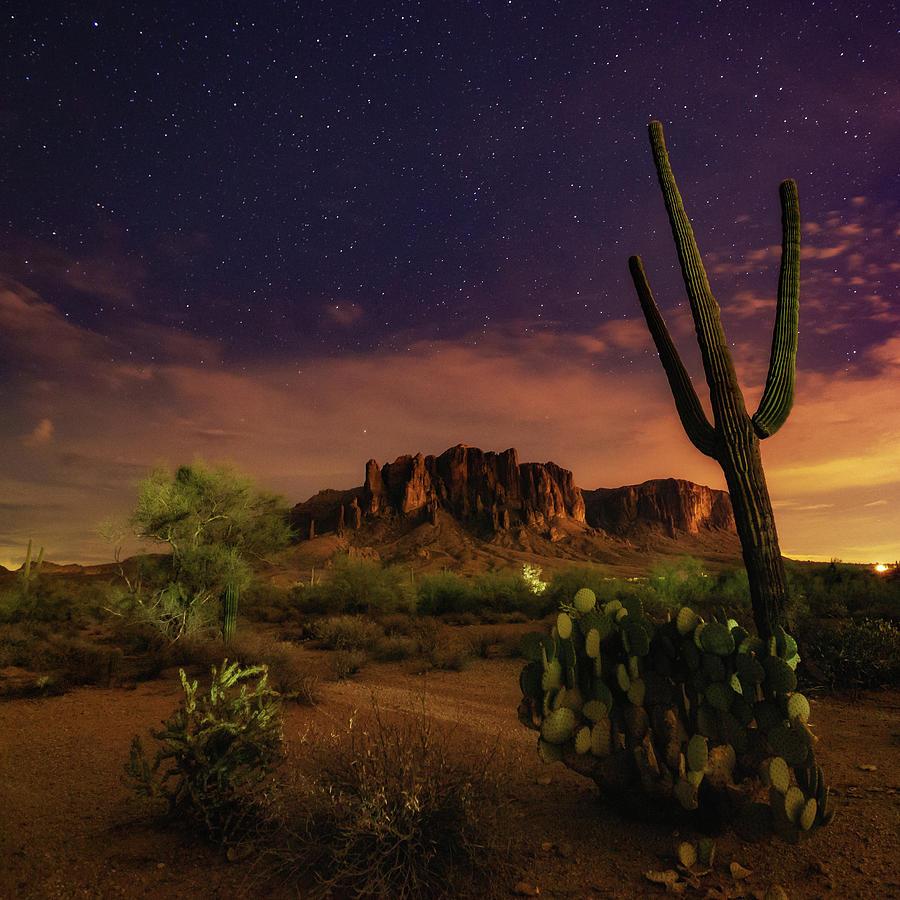 Desert Beauty by Tassanee Angiolillo