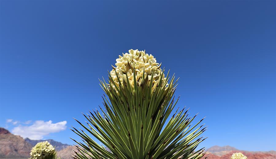 Desert Bloom by Sagittarius Viking