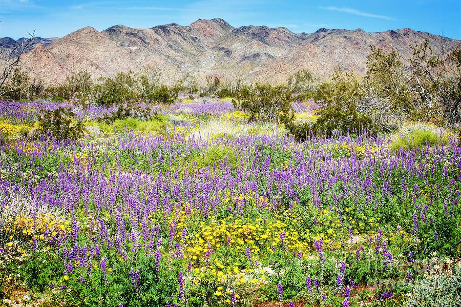 Desert Bloom by Scott Kemper