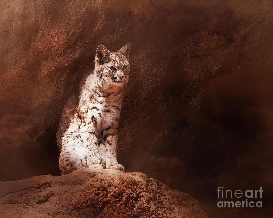 Desert Bobcat by Scott Kemper