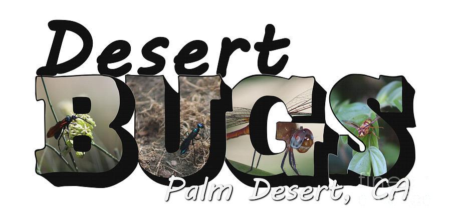 Desert Photograph - Desert Bugs Big Letter by Colleen Cornelius