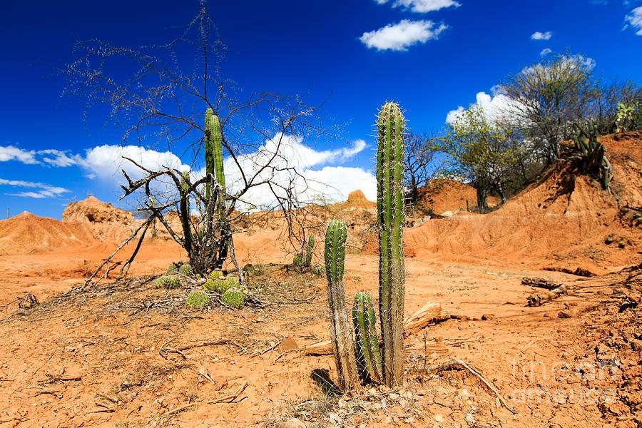 Beauty Photograph - Desert, Cactus In Desert, Tatacoa by Ilyshev Dmitry