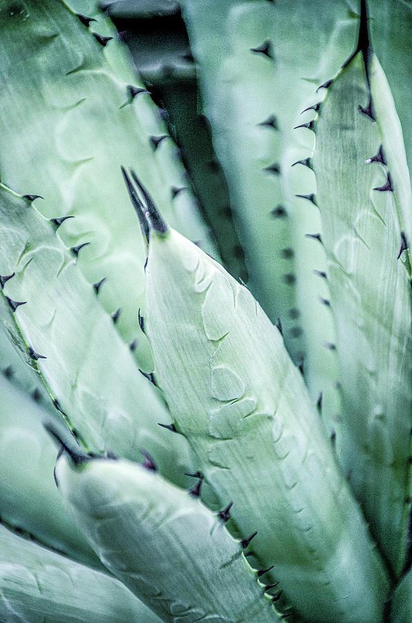 Desert Cactus by Julie Palencia
