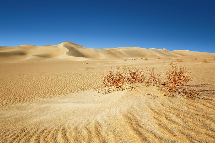 Desert Photograph by Cinoby