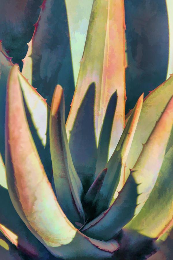 Desert Colors by Leda Robertson