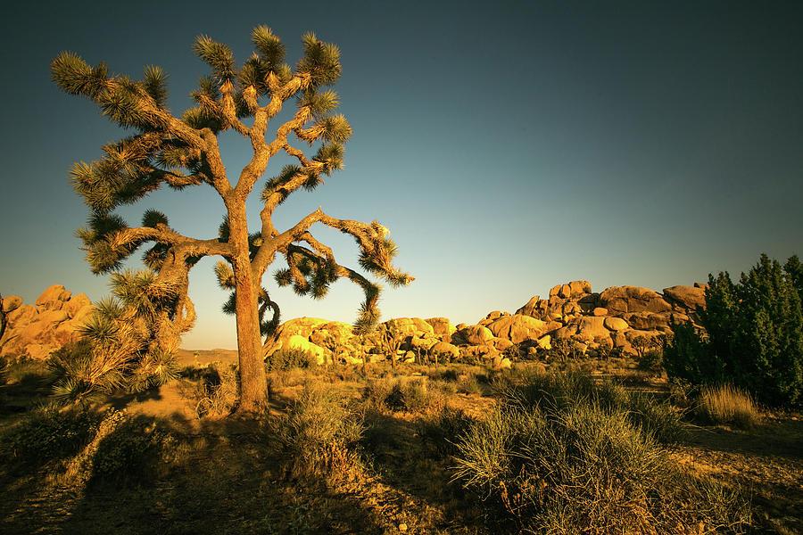Desert Dawn 1 by Ryan Weddle