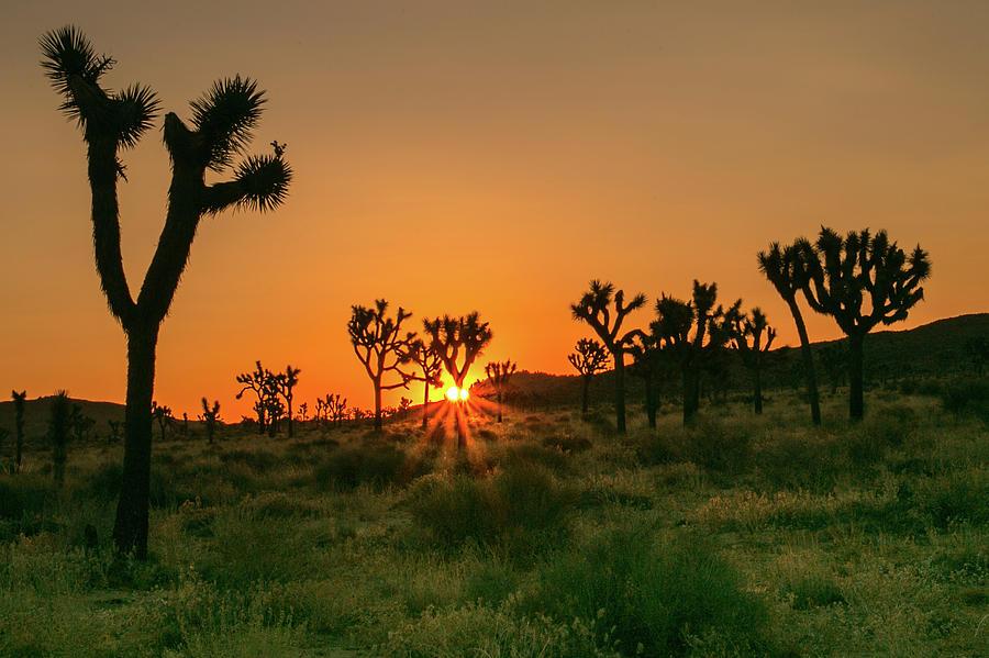 Desert Dawn 2 by Ryan Weddle