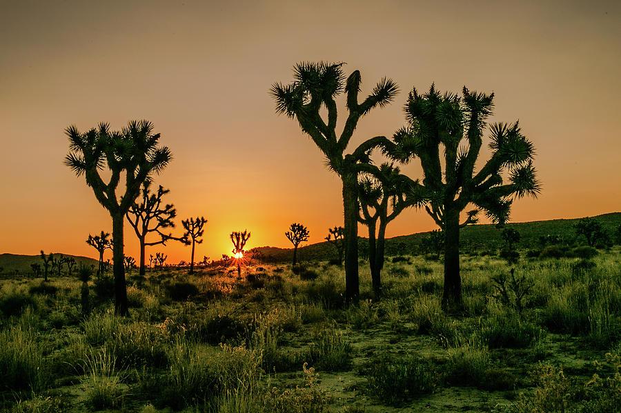 Desert Dawn 3 by Ryan Weddle