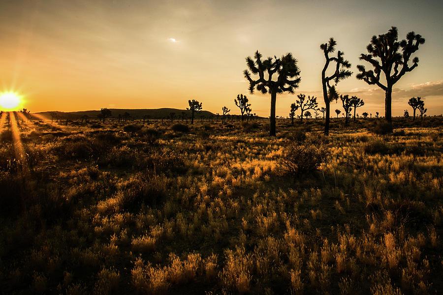 Desert Dawn 4 by Ryan Weddle