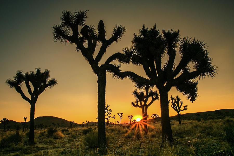 Desert Dawn 5 by Ryan Weddle